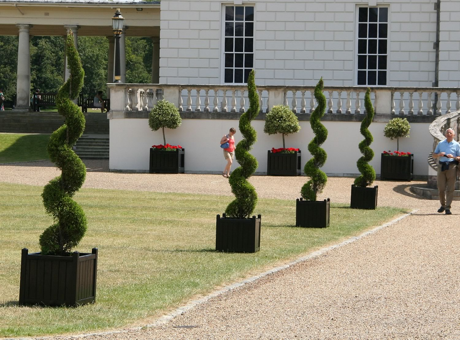 Exhibition Stand Hire Yorkshire : Topiary spirals ⋆ real oasis hiring plants trees