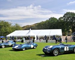 Concours of Elegance hire included Olive trees, topiary lollipops and topiary balls