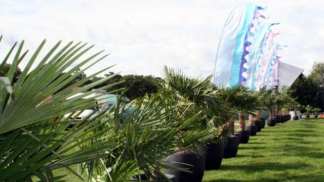 Talk Talk Palms trees