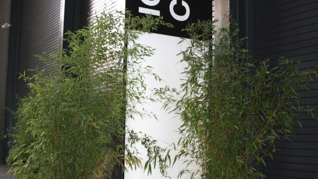 Wordskills event in London used large bamboos to dress a large space