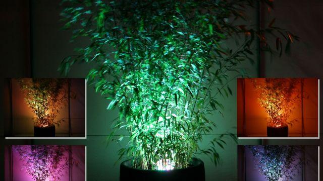 up lighting bamboos plants