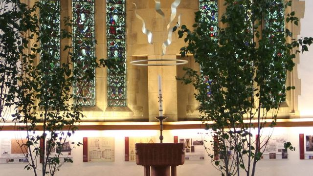 Multi-stemmed Birch tree hired to dress a church
