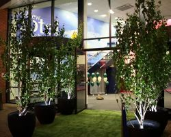 Hire Birch trees with up lighting to create an inviting night time venue entrance.
