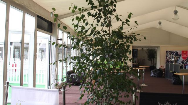 horseradish hospitality hire birch trees for Chester Race Course