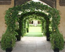 Ivy arch walkway created by joining 8 arches together.