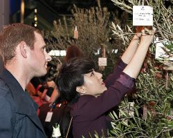 Olive trees hired as wishing trees