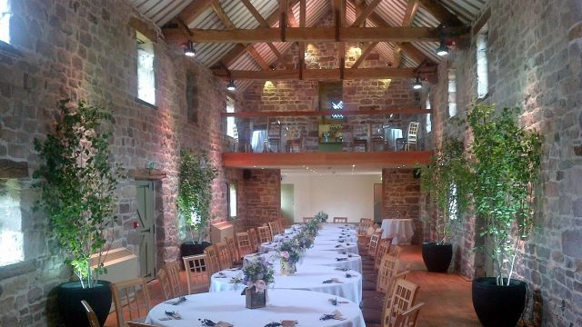 Multi-stemmed Birch tree hired to dress a venue