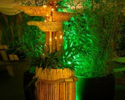Various jungle plants and props for Sagas 2016 Xmas party