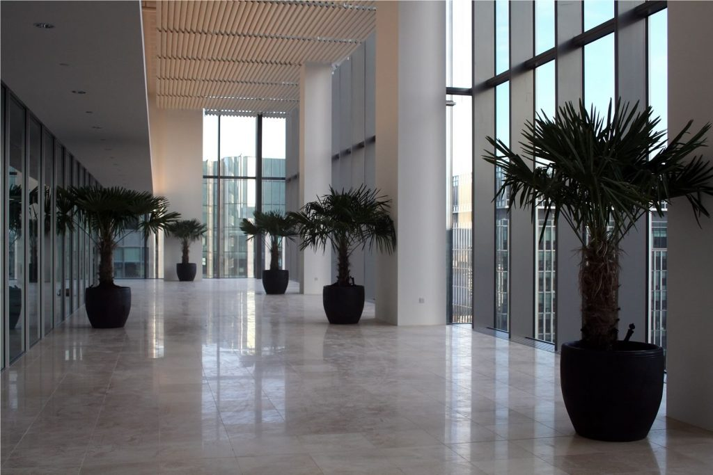 Large Chinese Windmill Palms @ Canary Wharf, London