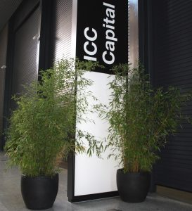 Large bamboos hired to dress the ICC London