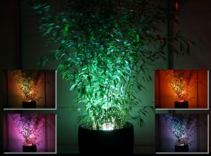 Adding impact to hired bamboo using LED lighting