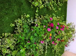 hire-living-wall