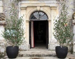 Multi stem birch trees hired for a church wedding in Wimborne St Giles, Dorset