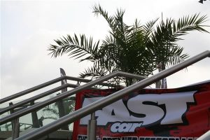 Canary Island Palm trees hired for Fast Car event @ Doncaster Race Course