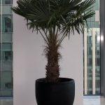 Hire palms trees to create that tropical look