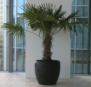 large palm hire canary wharf