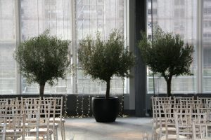 stunning mature Olive trees at a private wedding in the Rum Warehouse Liverpool Titanic Hotel
